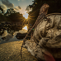 Helmeted iguana, Corytophanes cristatus, at sunset next to a river in the rainforest of Cocobolo Nature Reserve, Panama