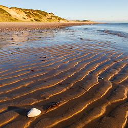 Clam shell on the beach along the Great Island Trail, Wellfleet, Massachusetts. Cape Cod National Seashore.