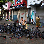 May 09, 2013 - Yangon, Myanmar: A local man feeds corn to pigeons en central Yangon. CREDIT: Paulo Nunes dos Santos