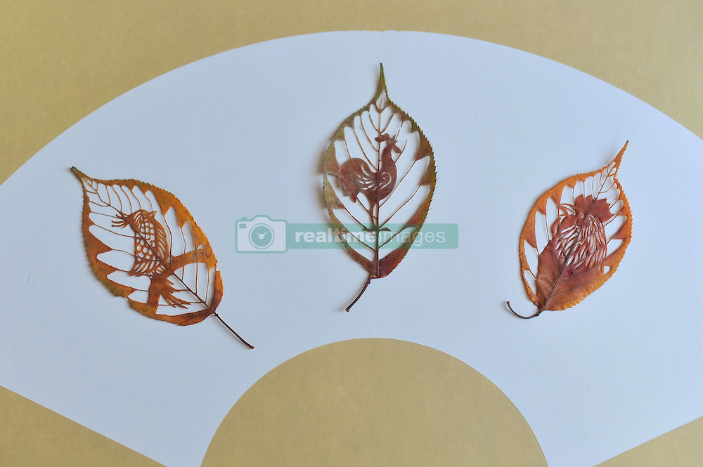 January 11, 2017 - Qingdao, Qingdao, China - Qingdao, CHINA-January 11 2017: (EDITORIAL USE ONLY. CHINA OUT) ..The rooster themed leaf carving artworks made by the primary school teacher Wang Ping in Qingdao, east China's Shandong Province, January 11th, 2017. Wang Ping collected various leaves in spare time and made many beautiful artworks of leaf carving in the way of paper-cutting. Natural leaf carving is actual manual cutting and removal of a leaf's surface to produce an art work on a leaf. (Credit Image: © SIPA Asia via ZUMA Wire)