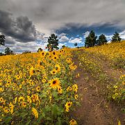 Flagstaff Area