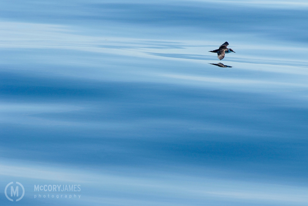 Bird flying over the surface of the ocean