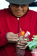 A competitor assembles a figure from radishes for Noche de Rabanos in Oaxaca, Mexico.