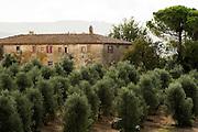 ITALY, Bolgheri (LI)<br /> One of the buidings in the Tenuta San Guido estate