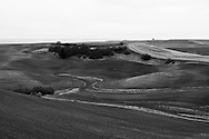 The rolling wheat fields that now cover much of the palouse hills were formed from glacial silt blown in from the west and the south.