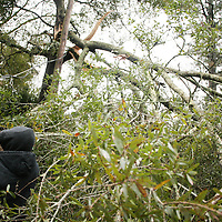 Jeremy Johnson works to remove a tree limb from a down power line on Larchmont Drive in Wilmington, N.C. Thursday February 13, 2014. The area saw two days of freezing rain that caused a loss of power for much of New Hanover, Pender, and Brunswick counties.   (Jason A. Frizzelle)
