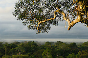 Canopy Scenic<br /> Yasuni National Park, Amazon Rainforest<br /> ECUADOR. South America
