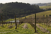 Pruning pinot noir at WillaKenzie Estate Vineyards, Yamhill-Carlton, Willamette Valley, Oregon