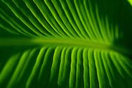 green plants bugs