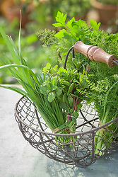 Wire basket of harvested herbs