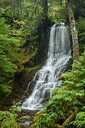 Tributary Falls (waterfall on an unnamed tributary of Hemlock Creek), on Hemlock Creek Trail #1505, Umpqua National Forest, Oregon.