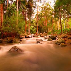 Panorama 9 photo stitch of the steam at Thunderbird Park, Mt Tamborine, Qld, Australia by Jaydon Cabe