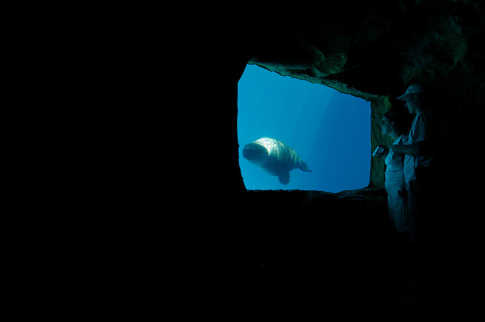 Visitors watch a seal through a viewing window at ZooMarine,  Algarve, Portugal.