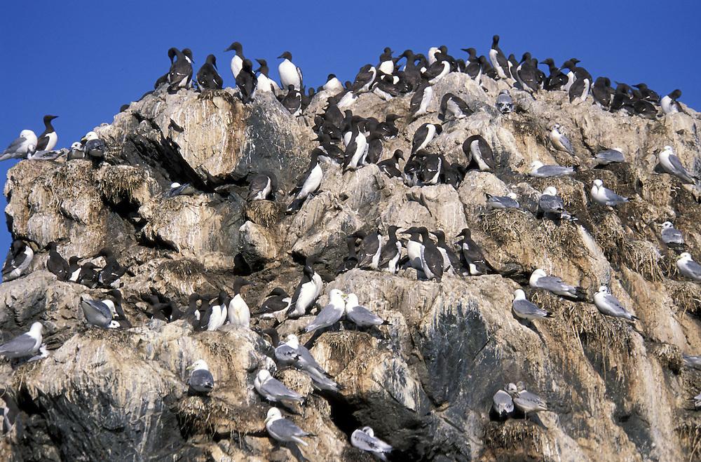 Gull Island.Kachemak Bay near Homer.Alaska.USA