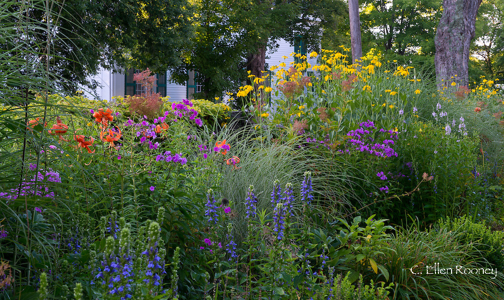 A mixed border of Phlox, Rudbeckia lacinata, Lilium henryi and Salvia in a garden in Rensselaerville, New York State, U.S.A.