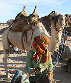 Muszeina bedouins - camel riding