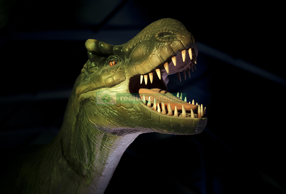November 10, 2018 - Malaga, MALAGA, Spain - A large replica of a dinosaur is seen during the DINO Expo XXL..This exhibition is divided into two periods (Dinosaurs age and Ice age), having more than 100 different animated dinosaurs replicas of 12 metres of measure, with mechanism of movement and sound. The project with figures of dinosaurs that are replicas to real scale, have the purpose to make the known details of the dinosaurs age when they settle on the earth. (Credit Image: © Jesus Merida/SOPA Images via ZUMA Wire)