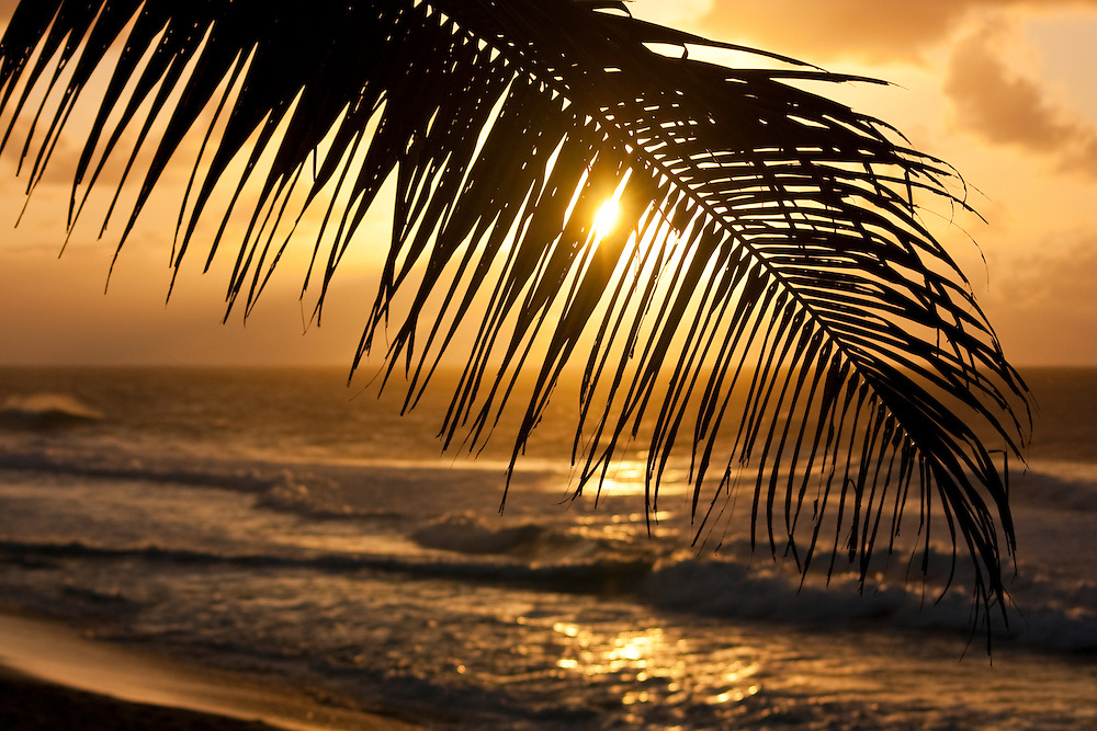 Palm frond silhouetted against the surf at sunset on Oahu's north shore, Hawaii. Photographic art prints.