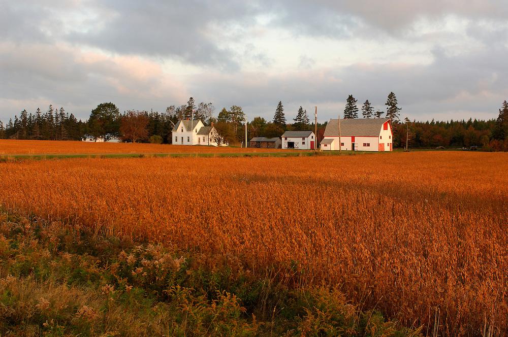 Farmhouse and Land near Town of Wood Islands, Prince Edward Island, Maritimes, Canada