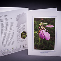 One of the most beautiful orchids found in NHs woodlands is the lovely Pink Lady's Slipper.  It is NH's State Wildflower. <br /> <br /> Artemis Photo Greeting Cards featuring NH native flora and fauna and historic sites. The cards are made exclusively in NH made from 100% FSC recycled paper, manufactured with wind and water power, and are archival acid free paper. Each card includes details on the back about the image, including interesting anecdotes, historic facts, conservation status, and recipes.