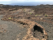 Volcan Chico<br /> Sierra Negra Volcano<br /> Isabela Island, <br /> GALAPAGOS,  Ecuador, South America