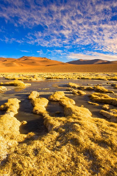 Vegas de Quepiaco salt lake and lagoon in the Altiplano (high Andean plateau) at an altitude of 4400m, Atacama desert, Chile, South America