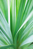Close-up view of an ornamental palm plant in a garden<br />