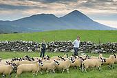 MSD - Westport Sheep Farming