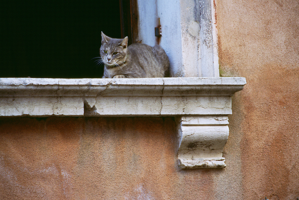 Cat sitting on window sill in Venice Italy