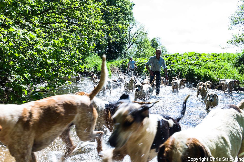 Abbotrule, Bonchester Bridge, Hawick, Scotland, UK. 10th June 2015. Huntsman Johnny Richardson leads the  hounds of the Jedforest Hunt through Rule Water near Hawick while excercising his pack on a hot afternoon in the Borders.