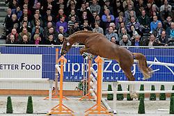 109 - Definitely A Liefhebber<br /> KWPN hengstenkeuring 2011 - 's Hertogenbosch 2011<br /> © Dirk Caremans