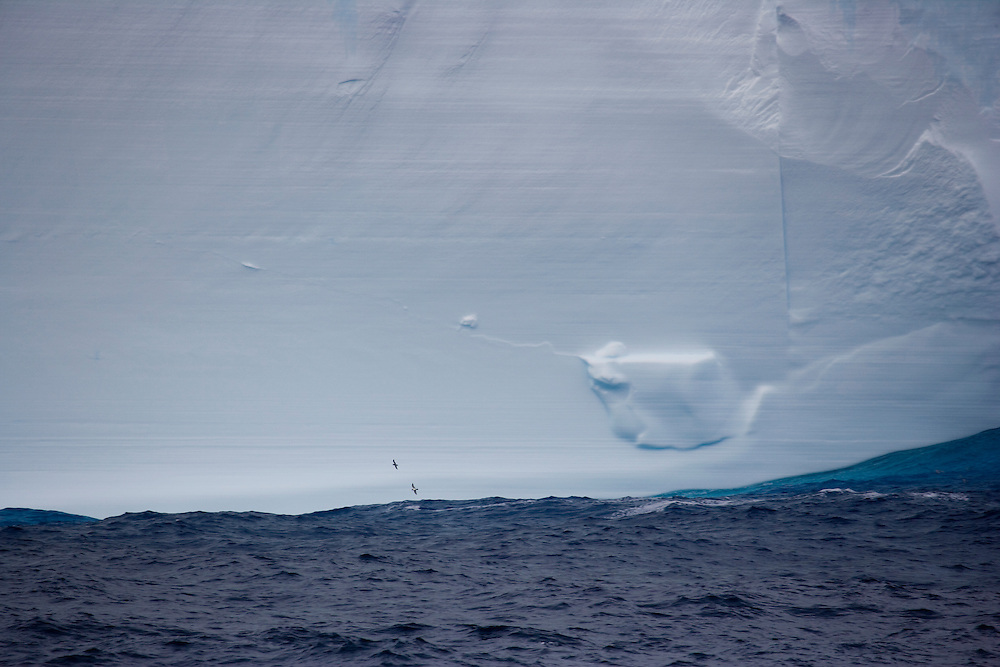 February 5th 2007. Southern Ocean. Birds fly past an iceberg in the Ross Sea.