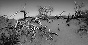 Burnt branches at he edge of the sand dunes at Death Valley National Park