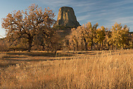 "Last month I visited Devils Tower when the fall colors were at their peak. Although the tower is mostly surrounded by a pine forest, there are some deciduous trees to the south by the Belle Fourche River. While wandering around before sunset I found this view of the tower above the oak and cottonwood trees. Established in 1906 by Theodore Roosevelt, this was the first national monument in the US. Devils Tower is actually a mistranslation of the Native American name ""Mato Tipila,"" which means Bear Lodge."