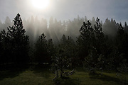Idaho, Coeur d'Alene. Sun burns through thick morning fog over evergreen trees and green grass of spring. . PLEASE CONTACT US FOR DIGITAL DOWNLOAD AND PRICING.