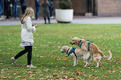 © Licensed to London News Pictures. 02/10/2018. London, UK. Two dogs get frisky before Catherine, Duchess Of Cambridge visit to Sayers Croft Forest School and Wildlife Garden at Paddington Recreation Ground. Photo credit: Ray Tang/LNP