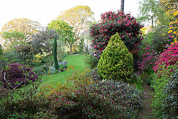 Rhododendrons and azaleas in the main garden near the house at Greencombe Gardens, Somerset