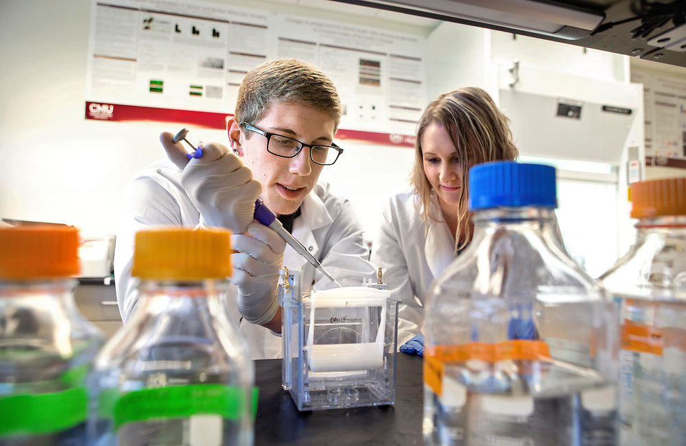 Honors student Matthew Finneran works with Jamie Johansen, Ph D, in a CMED lab on Parkinson's research at Central Michigan University. Finneran, whose hometown is South Lyon, is a Neuroscience and Chemistry double major. Central Michigan University photos by Steve Jessmore