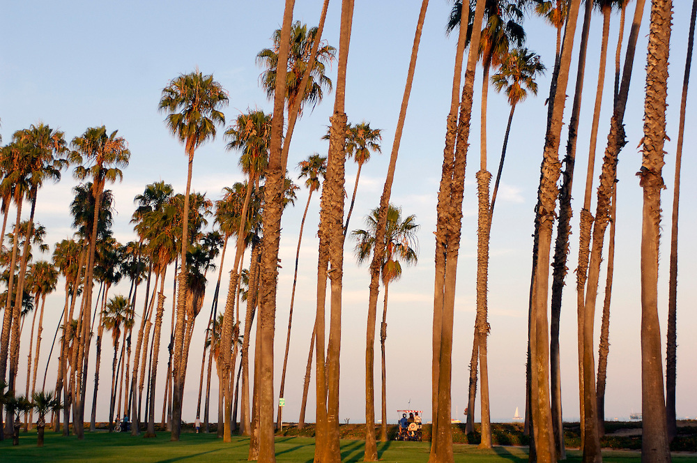 Palm Trees, Waterfront, Santa Barbara, California, United States of America