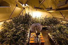 NL Cannabis Farm