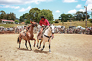 pick up rider returns a riderless horse after its apparent victory in throwing its rodeo rider at the Mid Northern Rodeo, Whangarei, New Zealand