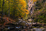 Small river in autumn forest