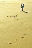 Portuguese Summer. A dog runs along the beach at Praia Grande in Sintra.
