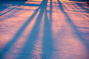 Winter sunset and tree shadows on snow, Brandon, Vermont