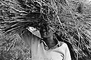 IPLM0046 , South Africa, ga-Modjadji, 29 June 2001. Woman with Thatching grass.