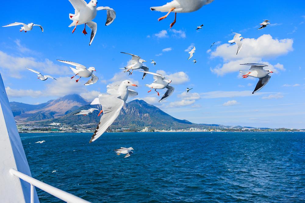 Birds flying alongside the Shimabara-Kumamoto ferry with Shimabara and Unzendake volcanic range in the background.