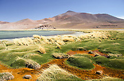 The vibrant colours of Laguna Santa Rosa in the high altitude desert of Nevado de Tres Cruces National Park, Chile.