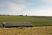 Free-range chickens of breed  Isa 257 roam freely in and out of their solar powered barn at Sheepdrove Organic Farm , Lambourn, England
