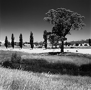 Hay bales and tree in country Victoria - Australia - Maroondah Highway Woodfield