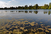 Young people paddling on the Colorado river in Austin, Texas